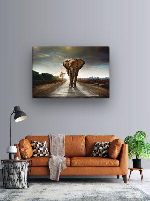 drobė vienišas dramblys