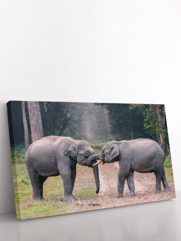 drobė drambliai žaidžia