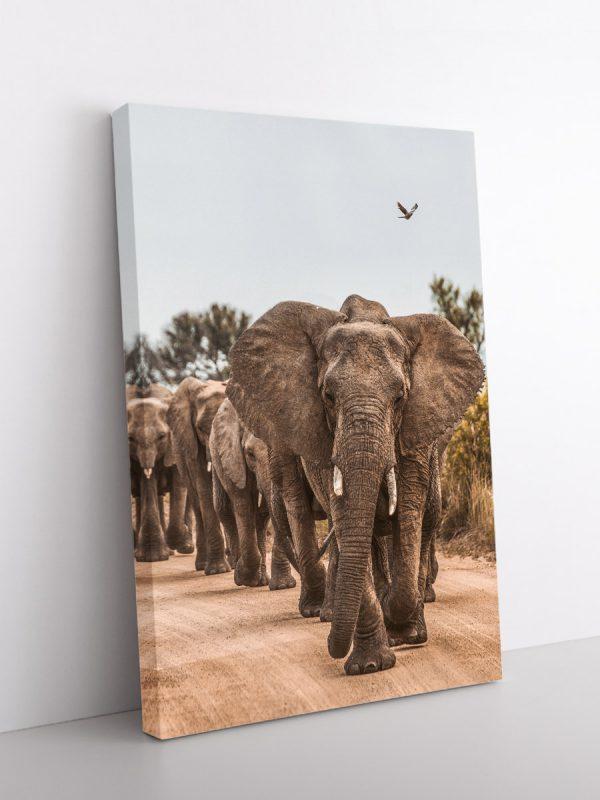 drobė drambliai keliauninkai