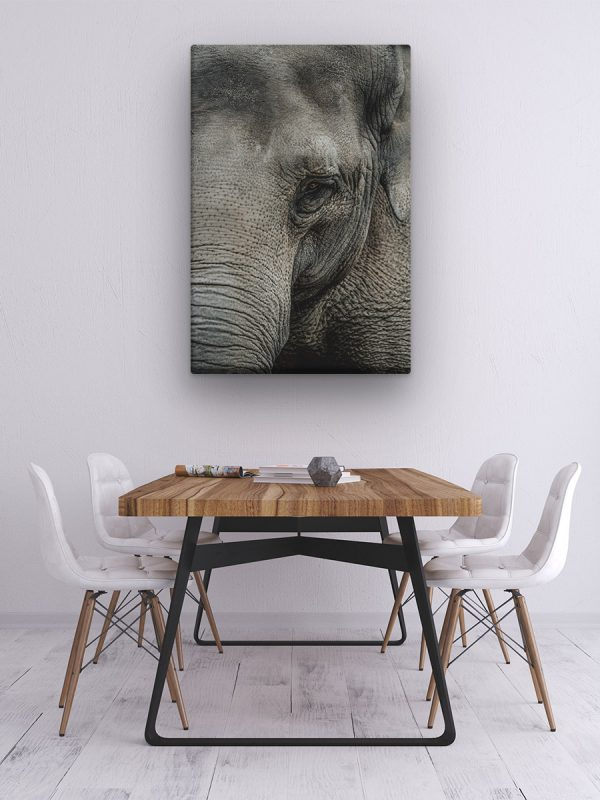 drobė dramblio žvilgsnis