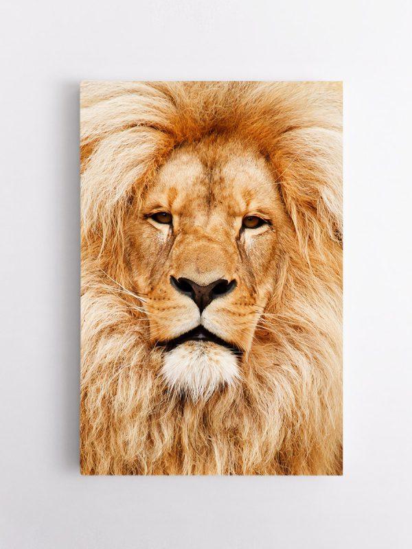 drobė šviesus liūtas