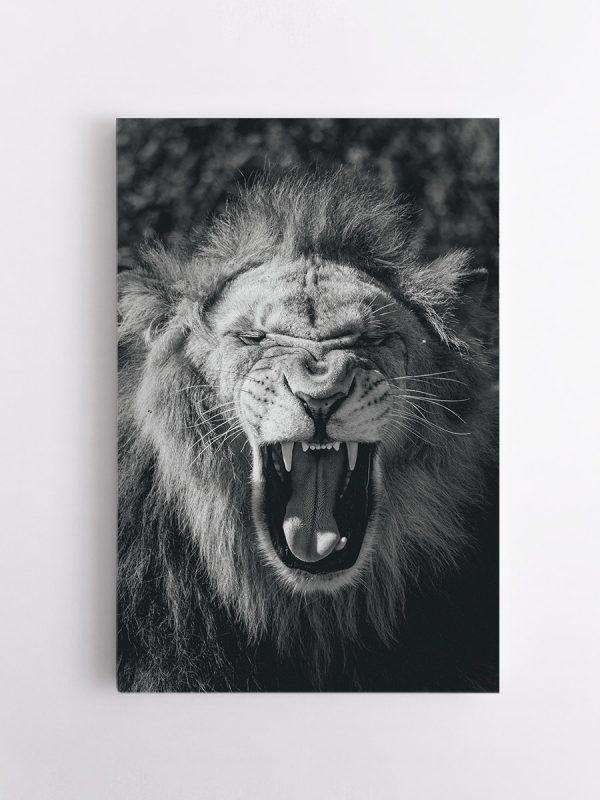 drobė riaumojantis liūtas