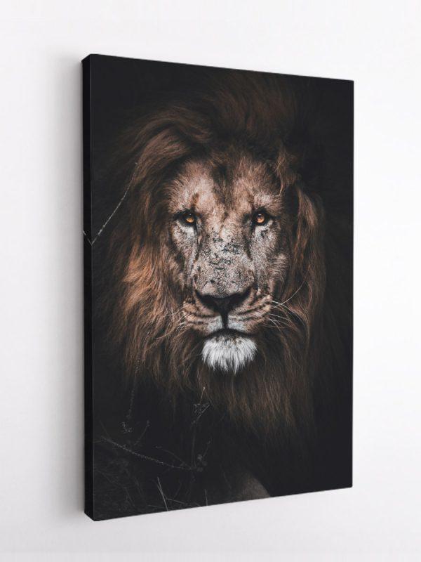 drobė randuotas liūtas