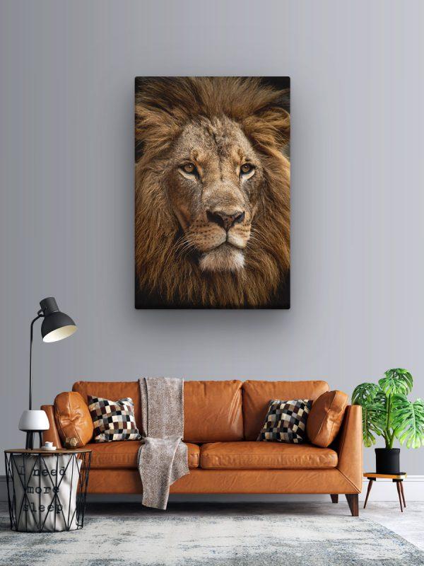 drobė liūtas
