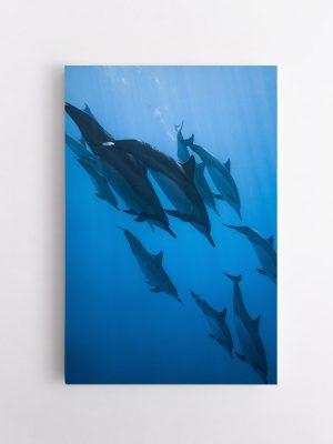 drobė delfinai