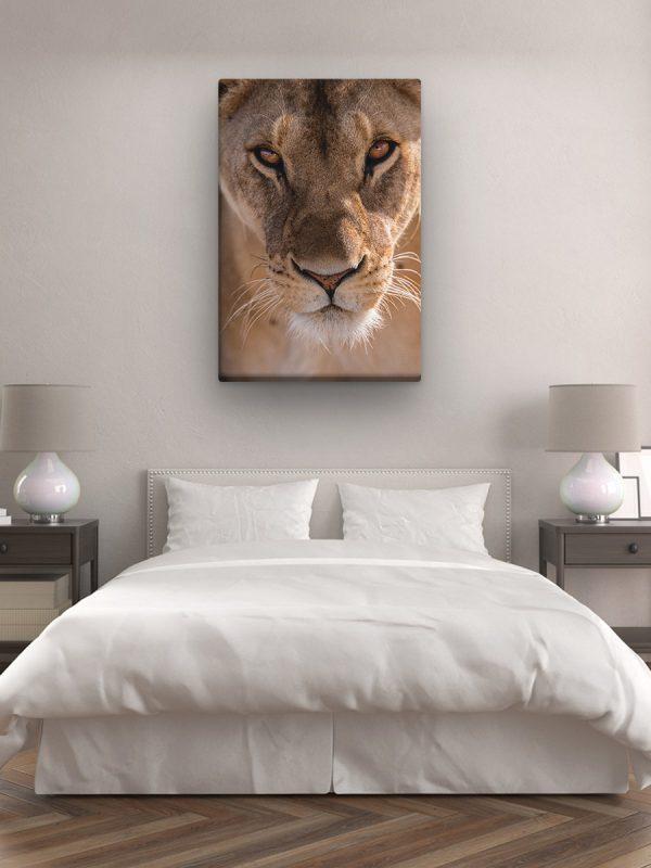 drobė rami liūtė
