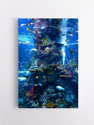 drobė akvariumas