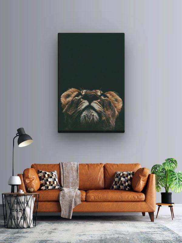 drobė liūtės žvilgsnis