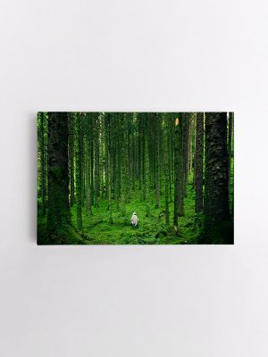 drobė samanotame miške