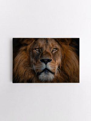 drobė ramus liūtas