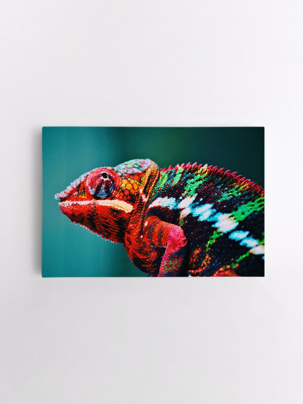 drobė chameleonas
