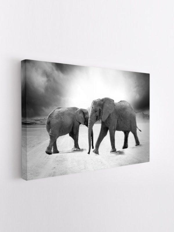 drobė drambliai dykumoje
