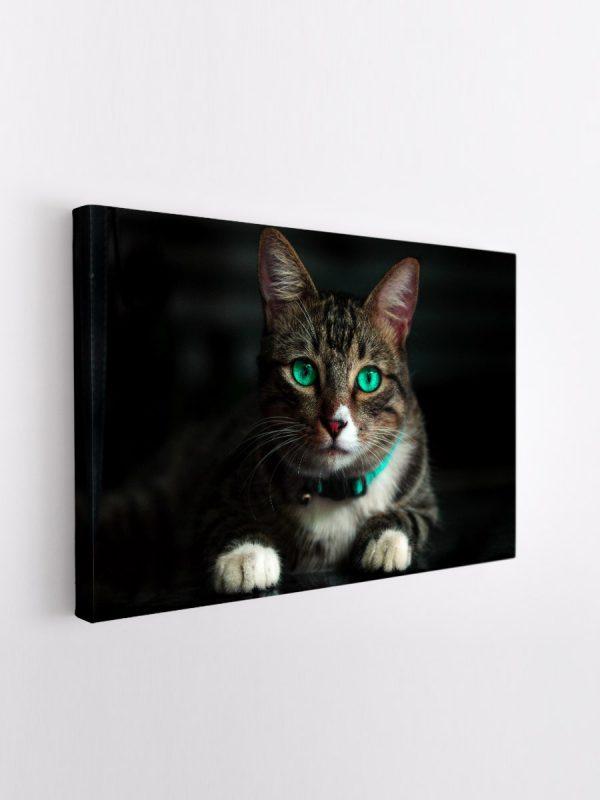 drobė žaliaakis katinas