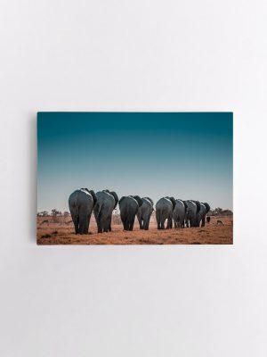 drobė dramblių kelionė
