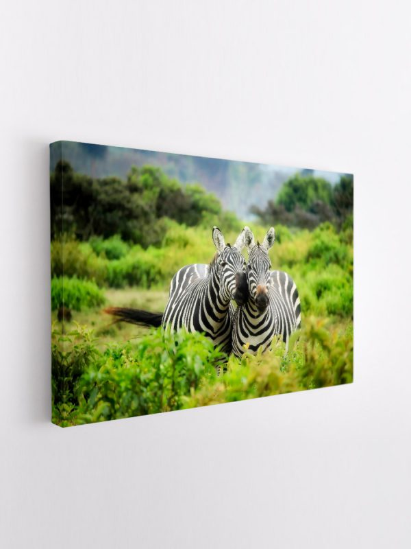 drobė zebrų porelė