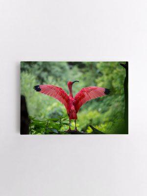 drobė beskrisiantis flamingas