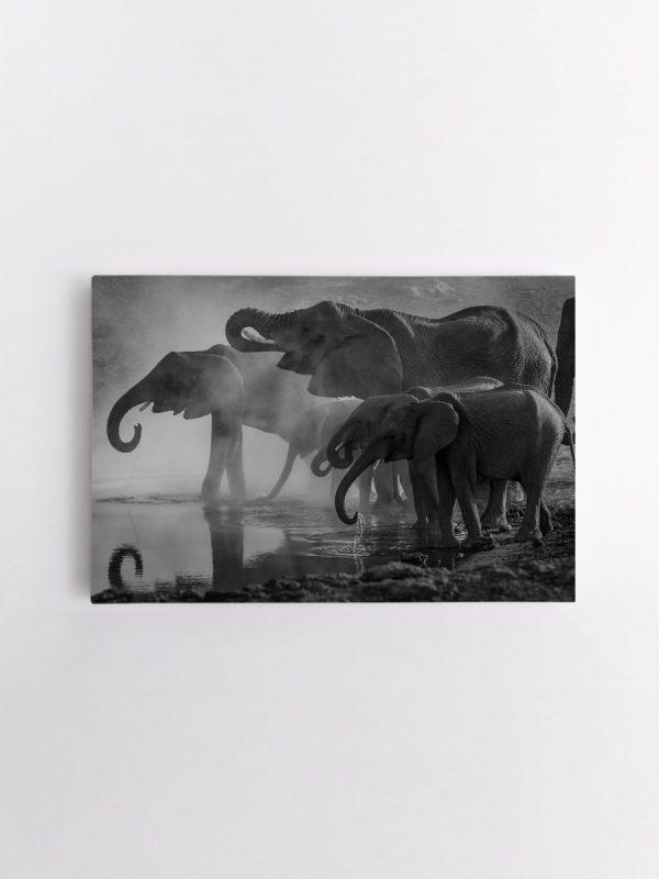 drobė geriantys drambliai