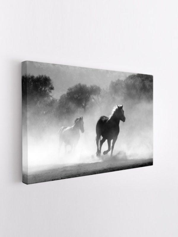drobė arkliai dulkėse