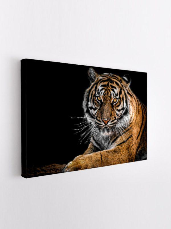 drobė ramus tigras