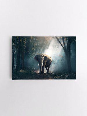 drobė dramblys miške