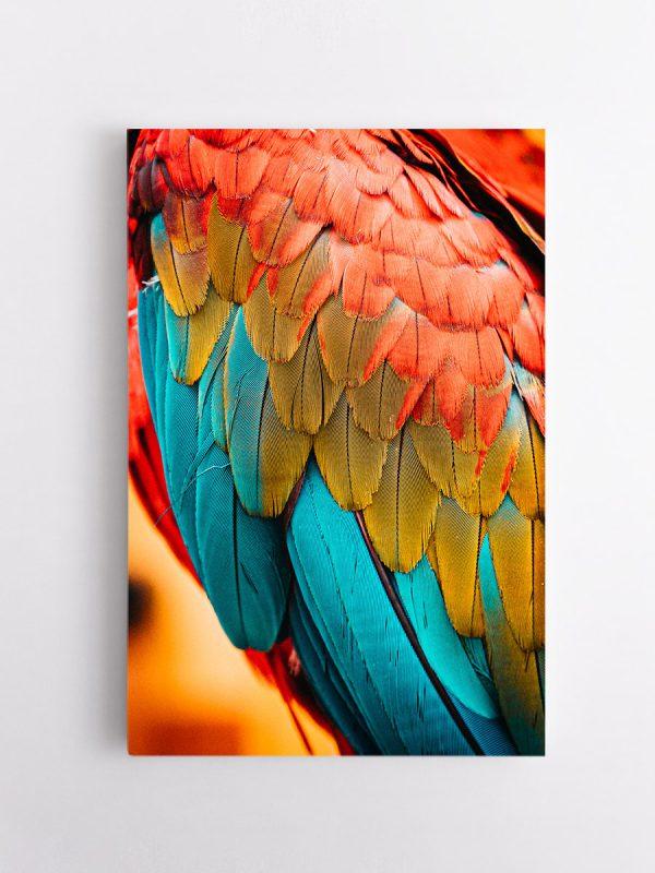 drobė papūgos plunksnos