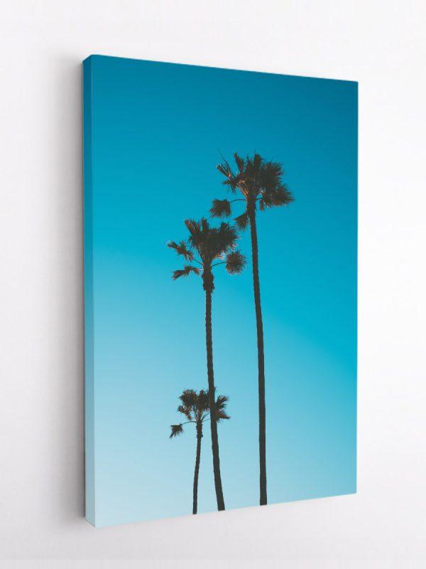 drobė trys palmės