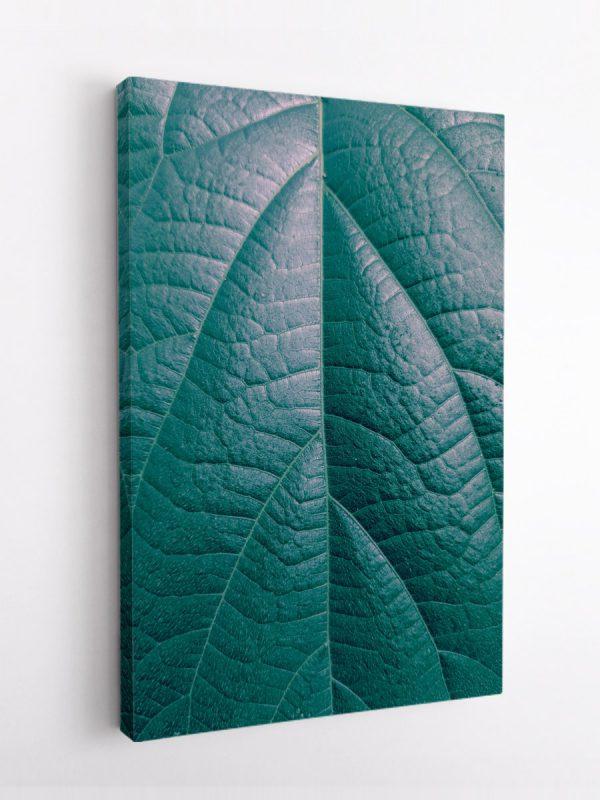 drobė lapo tekstūra