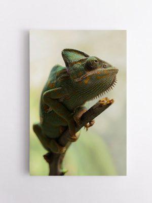 drobė žalias chameleonas