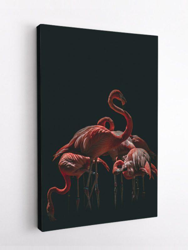 drobė flamingai tamsoje