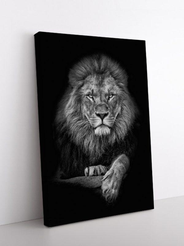 drobė piktas liūtas